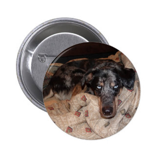 Catahoula Leopard Dog Snoozing Buttons