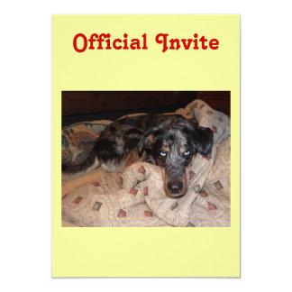 Catahoula Leopard Dog Snoozing Card