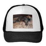 Catahoula Leopard Dog Snoozing Mesh Hat