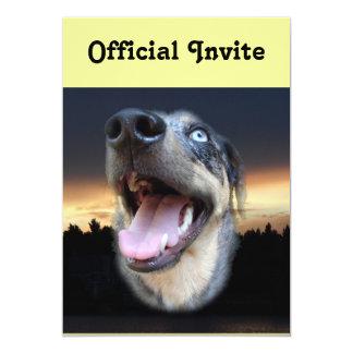 Catahoula Leopard Dog Sunset Card