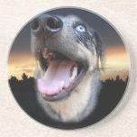 Catahoula Leopard Dog Sunset Coasters