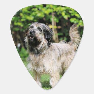 Catalan Sheepdog - Peppa Pick