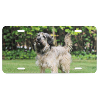 Catalan Sheepdog - Peppa License Plate