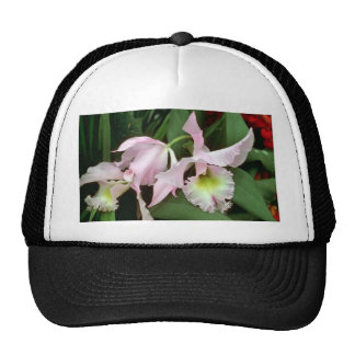 Catalaya orchid hat