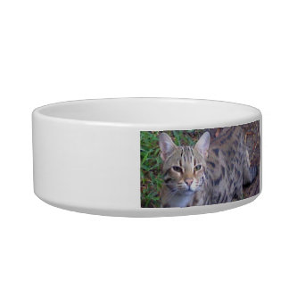 Catalina Cat Bowl