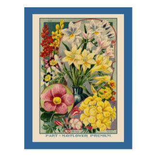 Catálogo de semilla de flor del vintage postal