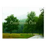 Cataloochee Cove - Foggy Day Postcard