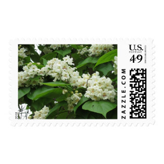 Catalpa Bloom Postage Stamps