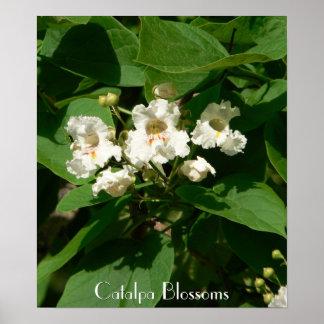 Catalpa Blossoms Poster