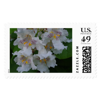 Catalpa Postage Stamps
