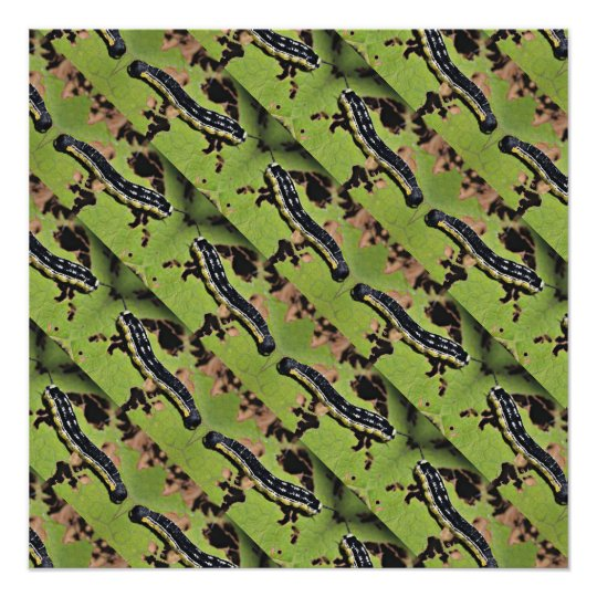 Catalpa worms camo catfish fishing poster zazzle for Catalpa worms fishing