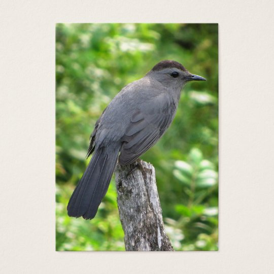 Catbird ATC Business Card