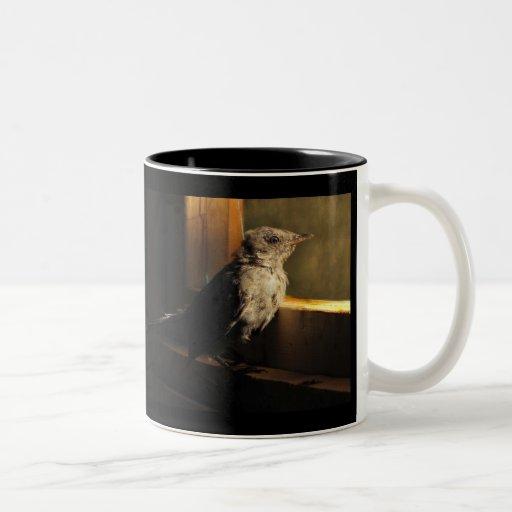 Catbird del bebé taza de dos tonos