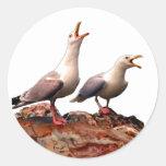 Catcalling Gulls Classic Round Sticker