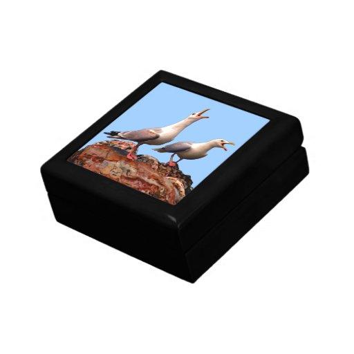 Catcalling Gulls Trinket Box