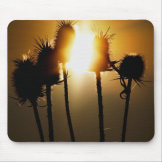 Catch the sun mouse pad