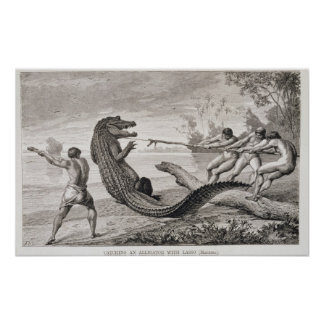 Catching an alligator with lasso poster