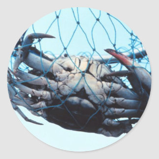 Catching Blue Crab Classic Round Sticker