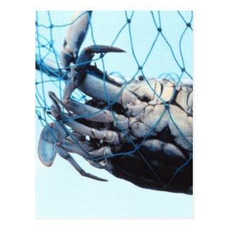 Catching Blue Crab Postcard
