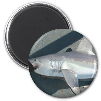 Catching Sharks 2 Inch Round Magnet
