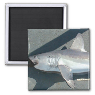 Catching Sharks 2 Inch Square Magnet