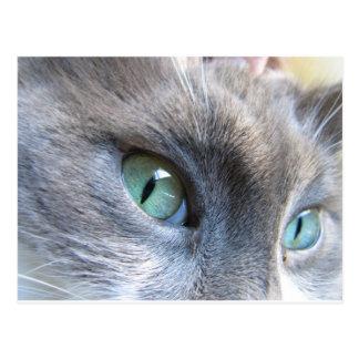 Cate Eyes Postcard