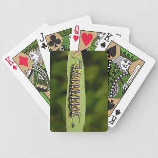Catepillar Poker Cards