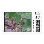 Caterpillar 1 sello
