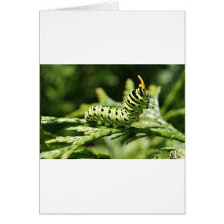 Caterpillar 2012 tarjetas