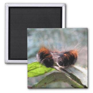 Caterpillar 2 Inch Square Magnet