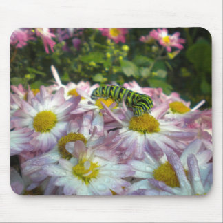 Caterpillar and Asters Mousepad