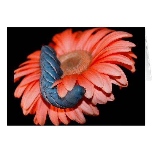 Caterpillar azul en la flor rosada tarjeta pequeña