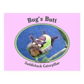 Caterpillar Bug's Butt Postcard
