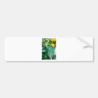 Caterpillar Bumper Sticker