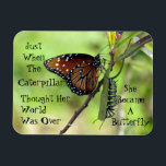 "Caterpillar / Butterfly Quote Magnet<br><div class=""desc"">quote by Barbara Haines Howett Photo of Queen Butterfly and Monarch caterpillar by D&#39; Marie</div>"