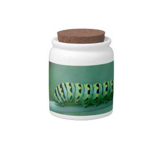 Caterpillar Candy Dish