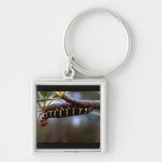Caterpillar coloreado hermoso llavero cuadrado plateado