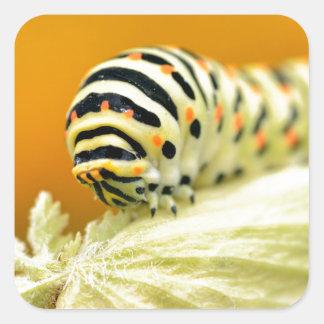 Caterpillar del swallowtail pegatina cuadrada