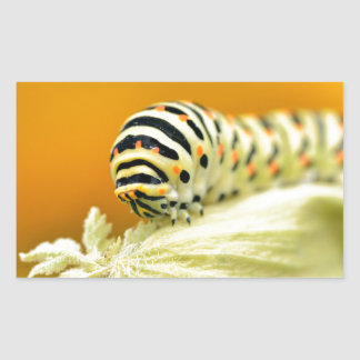 Caterpillar del swallowtail pegatina rectangular