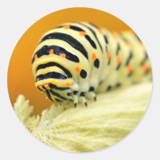 Caterpillar del swallowtail pegatina redonda