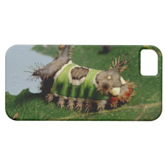 Caterpillar Eating a Leaf iPhone SE/5/5s Case
