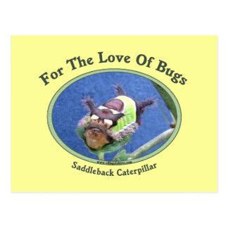 Caterpillar el amor de insectos tarjetas postales