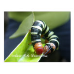 Caterpillar en la hoja postales
