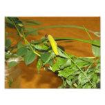 Caterpillar Fotografias