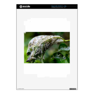 Caterpillar Hatch Cocoon Rain Fall Decal For iPad 2