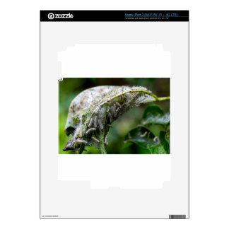 Caterpillar Hatch Cocoon Rain Fall Decal For iPad 3
