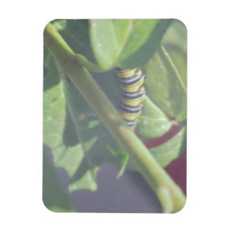 Caterpillar Hiding in a Plant Photo Magnet