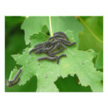 caterpillar huddle custom invitations