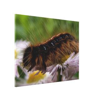 Caterpillar II Canvas Print