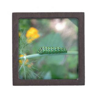 Caterpillar Jewelry Box